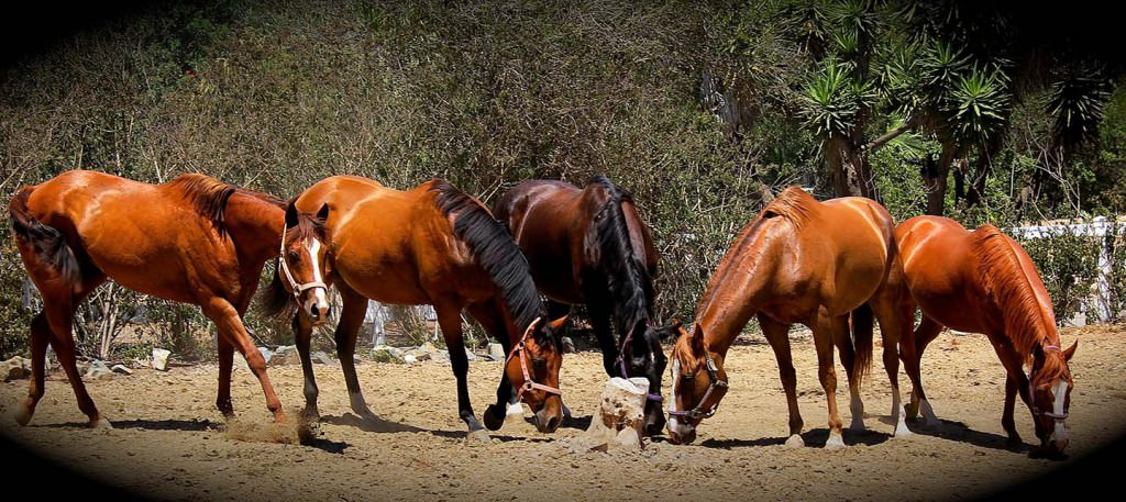 Barking Elf Ranch Horses